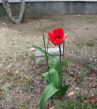 2012_0410AJ.JPG
